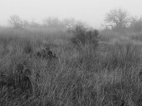 cactus grass b&w-2.jpg