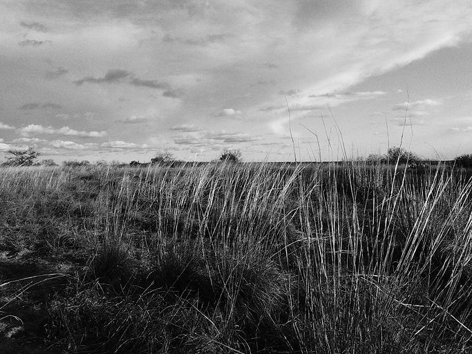 shape ranch landscape 1(1)-2.jpg