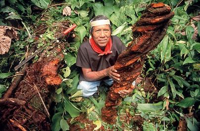 droga-ayahuasca-el-alucinogeno-de-moda-2