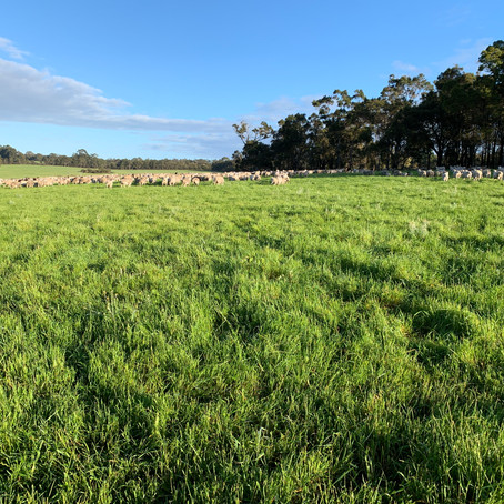 The downside of peak pasture growth rates