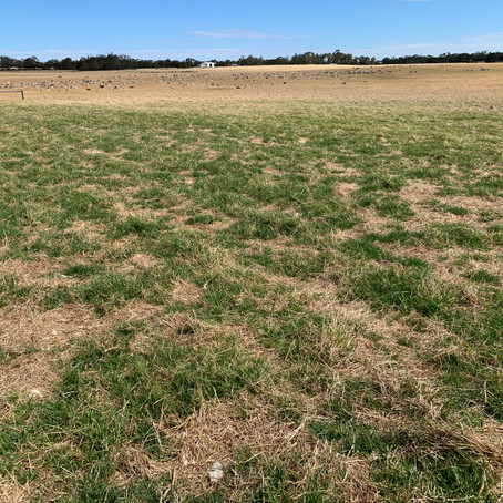 30t/ha of lime is enough, right? Nope.