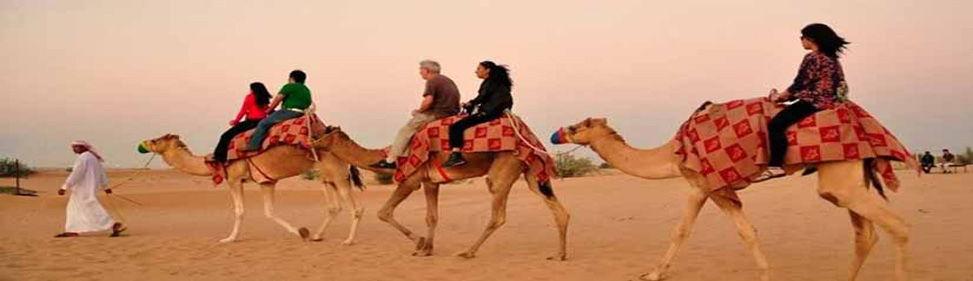 Camel Dubai.jpg