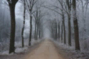 winter woodland path with frot.jpg
