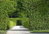 Springtime hedge cut arch kent arboreal