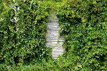 overgrown garden cleearance kent arborea