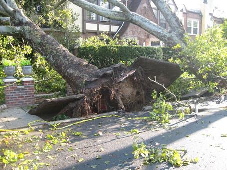 Faversham Tree Surgery