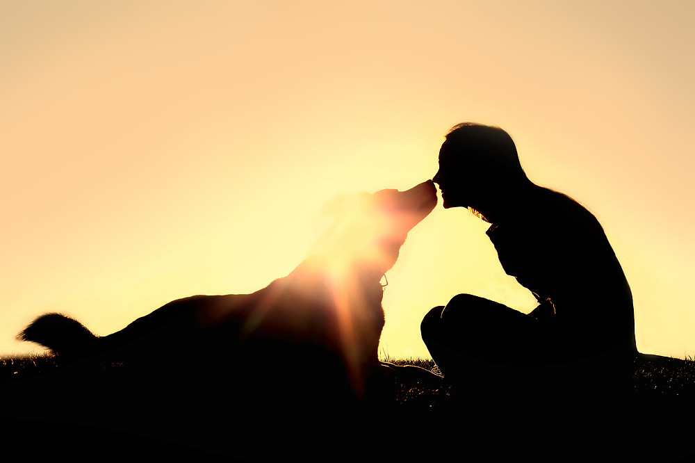 Happy Woman And Dog Outside Silhouette.jpg