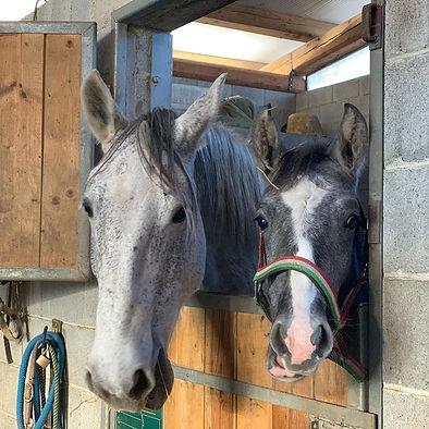 cavalli cascina.jpg