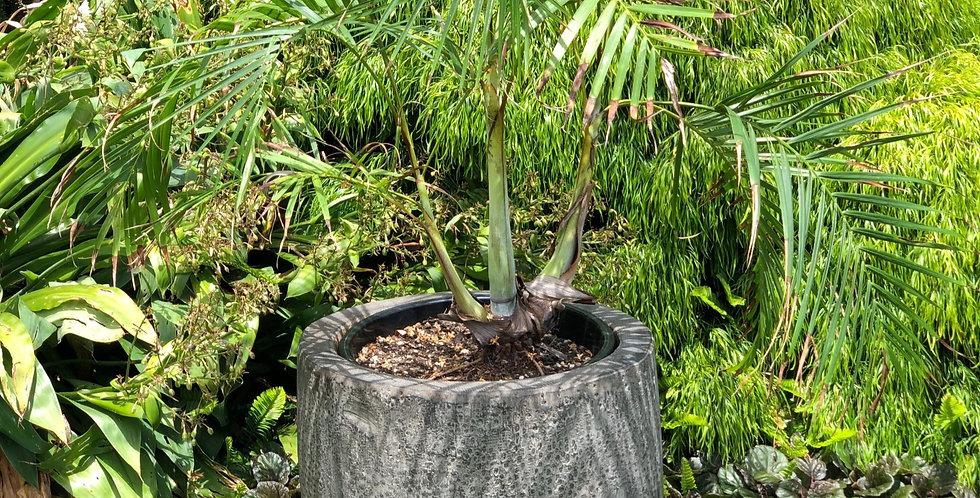 Coconut Pot - Black