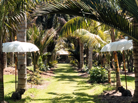 White Umbrellas With Elephant Stands At The Entrance Way To The Palm Garden