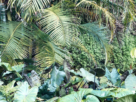 Lush Tropical Garden at Bali Garden Accommodation