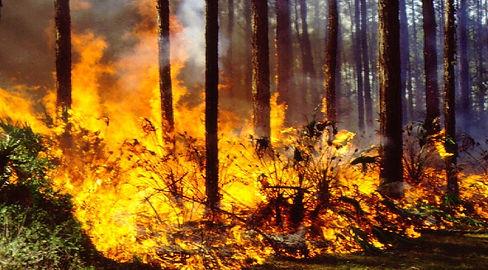 wildfire photo.jpg