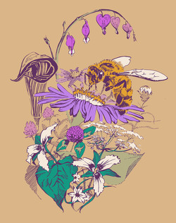 Vermont Wildflowers