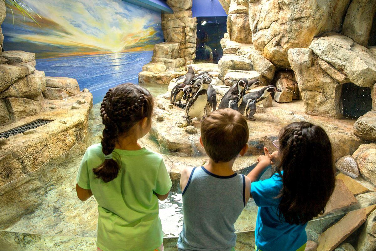 Humboldt Penguin Exhibit Mural