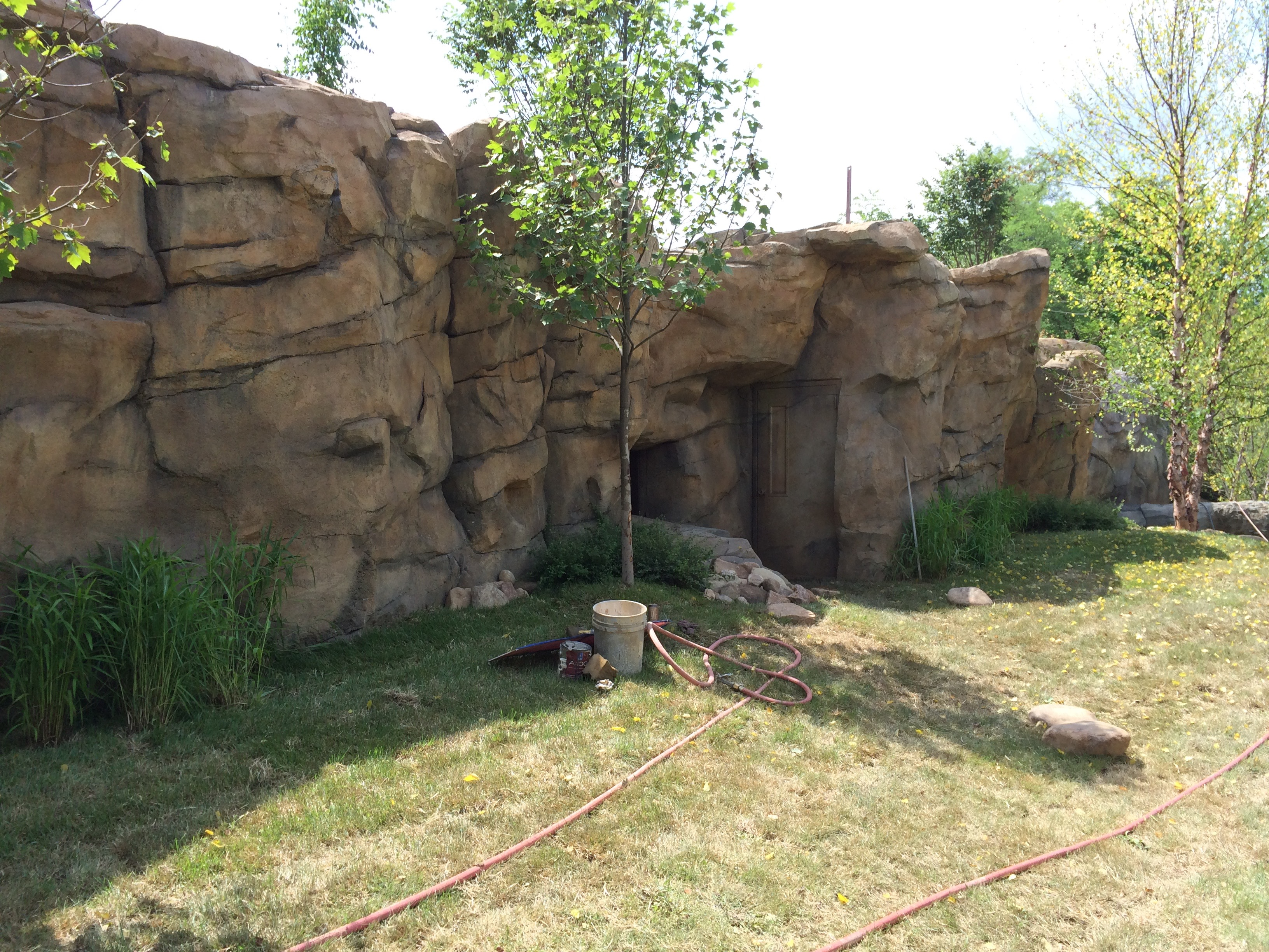 Wild Dog Exhibit