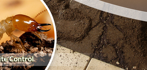 Protecting Your Home From a Termite Infestation Sydney.