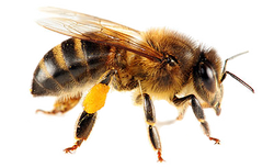 Bee control Granville
