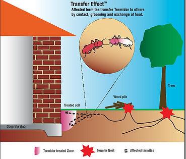 Termidor Sydney Pest Control