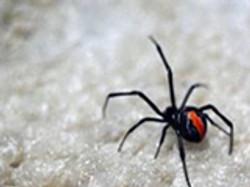 spiders control Granville