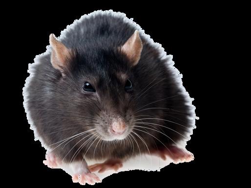 Pest Prevention Tips & Advice