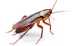 cockroaches treatment Granville