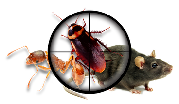 Pest inspection sydney