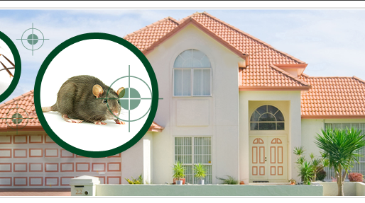 6 Signs Of Pest Infestations To Look For When House Hunting in Sydney