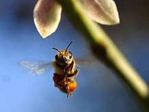bee hives removal & control sydney