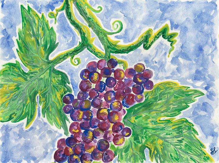 The Seven Species - Grapes