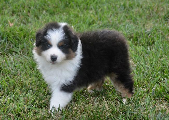 Alita at 6 weeks