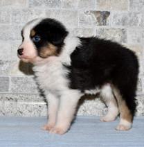 baby Maggie at 5 weeks