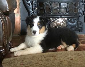 Maggie 3 months