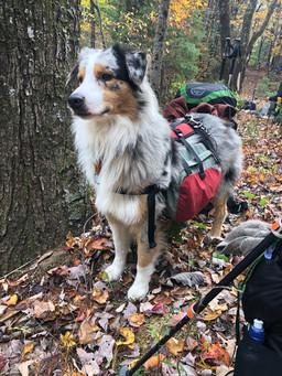 Hiking Diesel