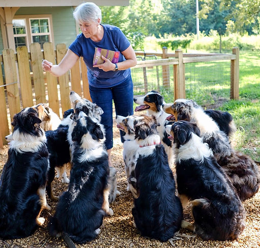 We love and train our Aussies!