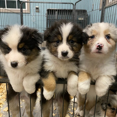 Oakley, Blitzen, and Lily from Willow an