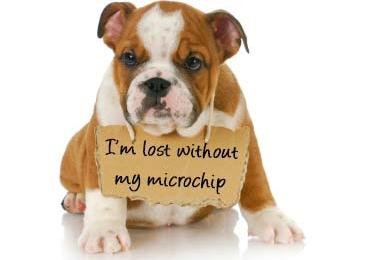 Microchip, serve pra que??