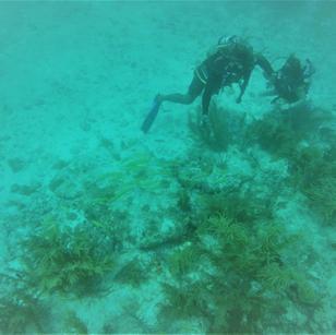 Buceo y Snorkeling