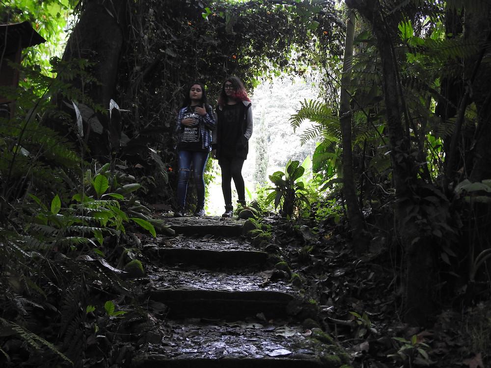 Sendero ecológico de Bosque de los deseos - Hotel Cabañas JC Reserva Natural en Santa Rosa de Cabal