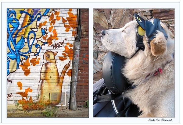 "This cool, painted alley cat and motorcycle-driving wild dog meet in the poem, ""Dog Day Dreams""..."