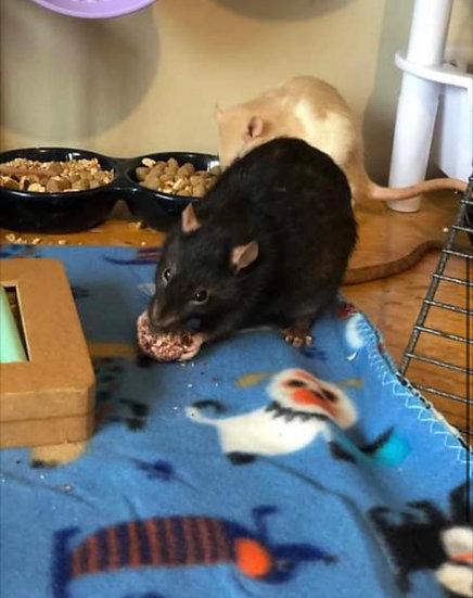 Christmas Ratty Rat bundle