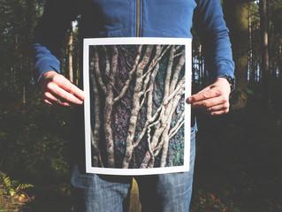 Sobre a vida, e algumas raízes