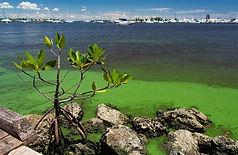 newsEngin.22506082_20180612-stuart-algae