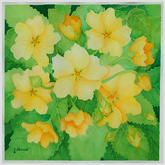 Yellow%20Ilima%20Oahu%20Flower_edited.jp