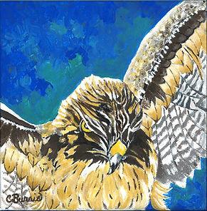 Lady Hawk.jpg