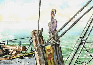 Burris%20-%20Pelican%20going%20fishing_e