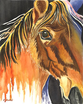 Marcella's Horse.jpg