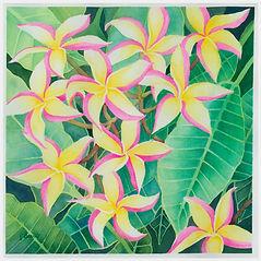 Tropical%20Plumeria_edited.jpg