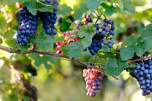 Pinot Noir Balsamic