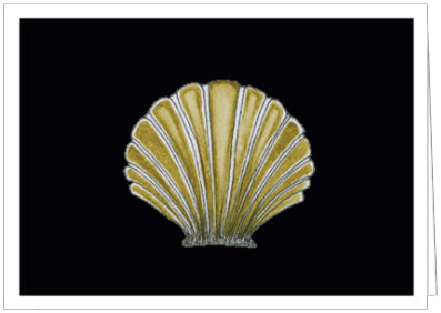 CHIC CLAM SHELL