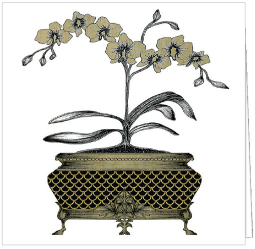 ORNATE ORCHID